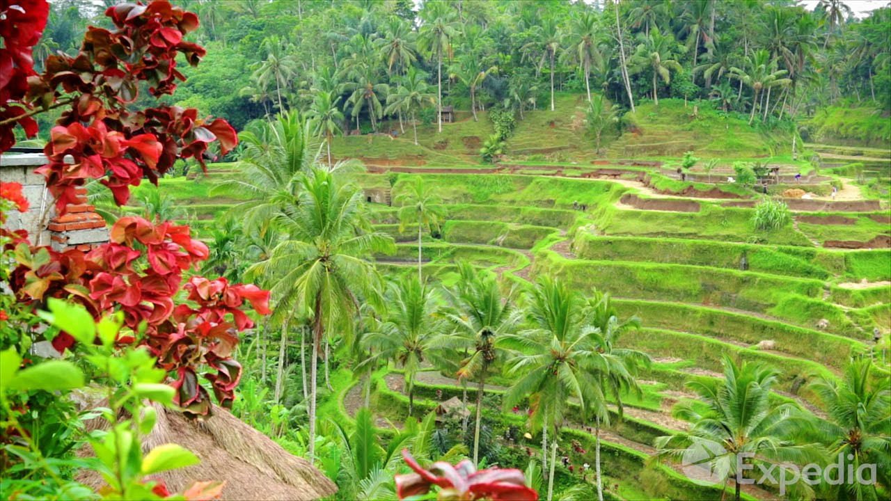 Bali Video Travel Guide   Expedia Asia